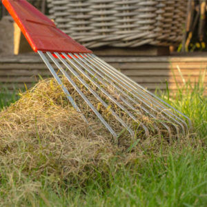 dethatching your Cleveland lawn is an essential spring lawn care task.