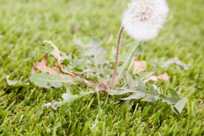 Summer Weed Control: How to Keep Your Yard Weed-Free