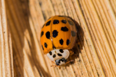 Fall Pest Prevention: Tips to Keep Your Home Pest-Free This Fall and Winter